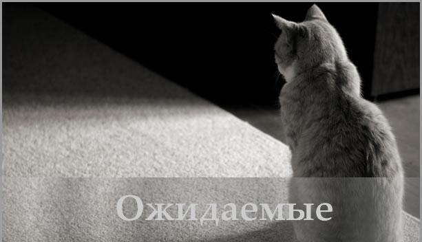 ojidaemiye